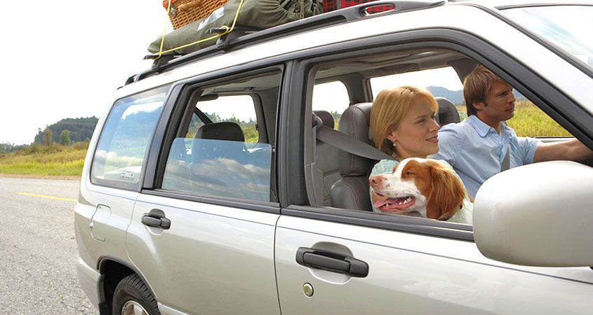How-to-Survive-a-Car-Trip-with-Your-Pets